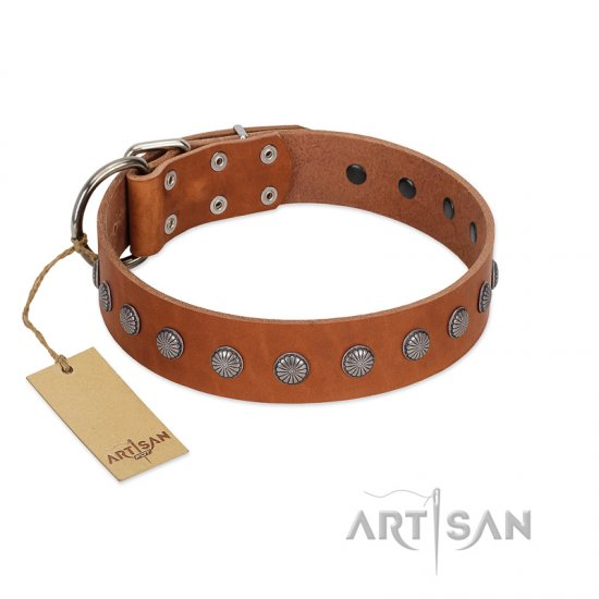 """Little Floret"" Fashionable FDT Artisan Tan Leather Boxer Collar with Silver-Like Adornments"
