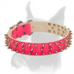 Pink leather Boxer collar with spikes