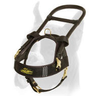 Comfortable Leather Guide Harness for Boxer
