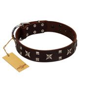 """Bigwig Woof"" FDT Artisan Brown Leather Boxer Collar with Chrome Plated Stars and Square Studs"