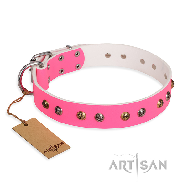 Everyday walking decorated dog collar with rust resistant hardware