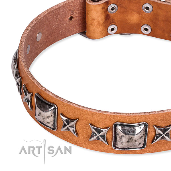 Everyday use embellished dog collar of finest quality full grain natural leather