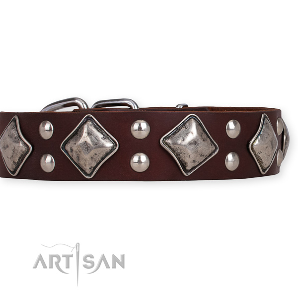 Full grain natural leather dog collar with exceptional reliable studs