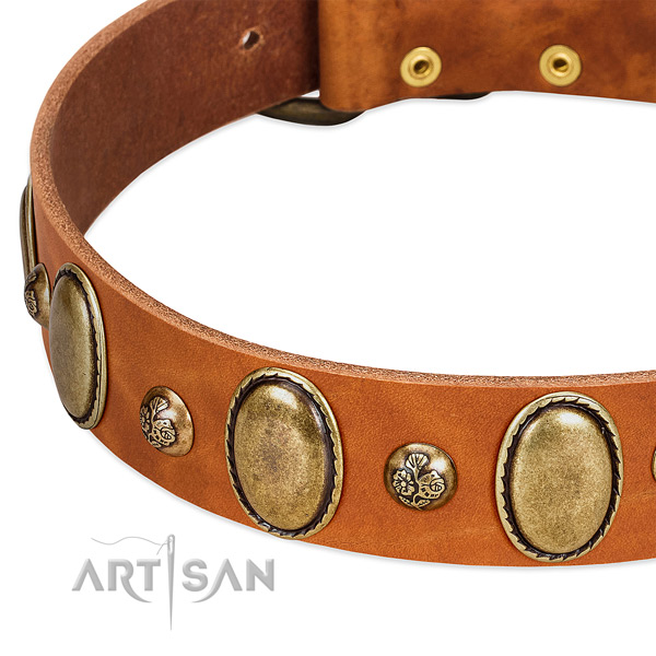 Natural leather dog collar with inimitable studs