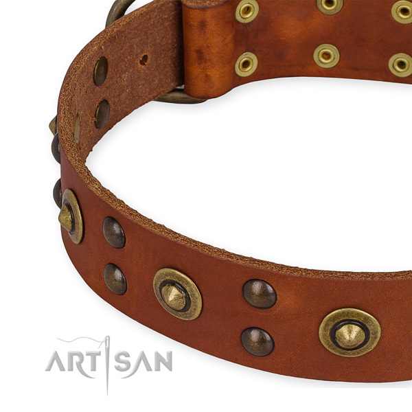Genuine leather collar with rust resistant D-ring for your impressive four-legged friend