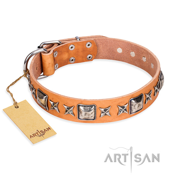 Fancy walking dog collar of high quality full grain leather with studs