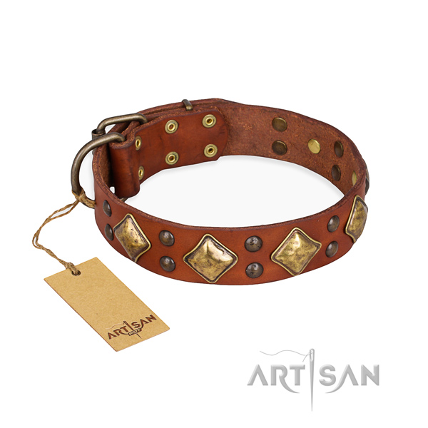 Everyday use amazing dog collar with strong hardware