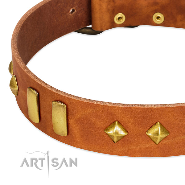 Handy use leather dog collar with significant embellishments