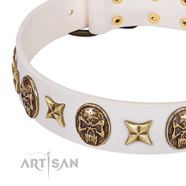 Studded dog collar crafted for your beautiful four-legged friend
