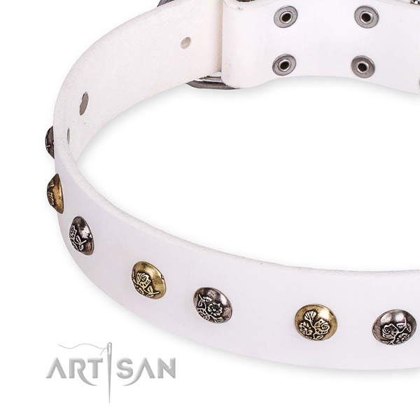 Natural leather dog collar with incredible rust resistant studs