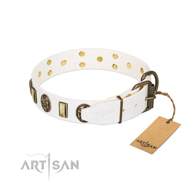 Corrosion proof buckle on full grain natural leather collar for fancy walking your canine