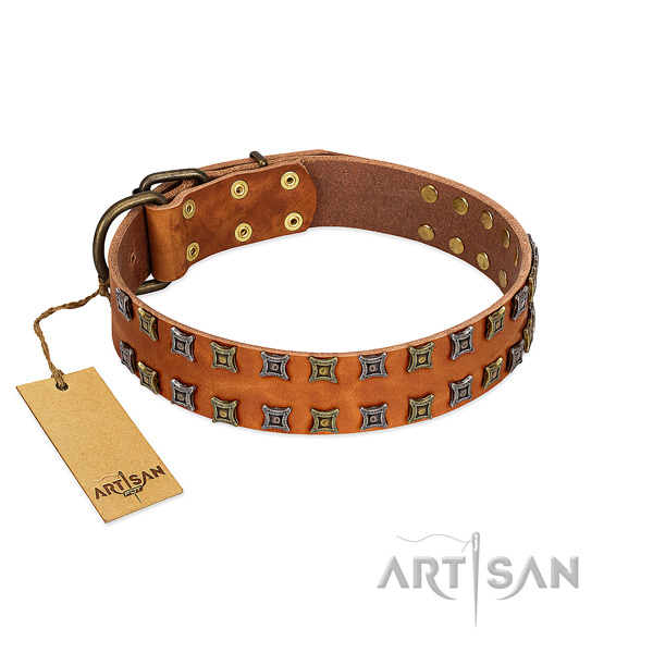 Reliable genuine leather dog collar with studs for your four-legged friend