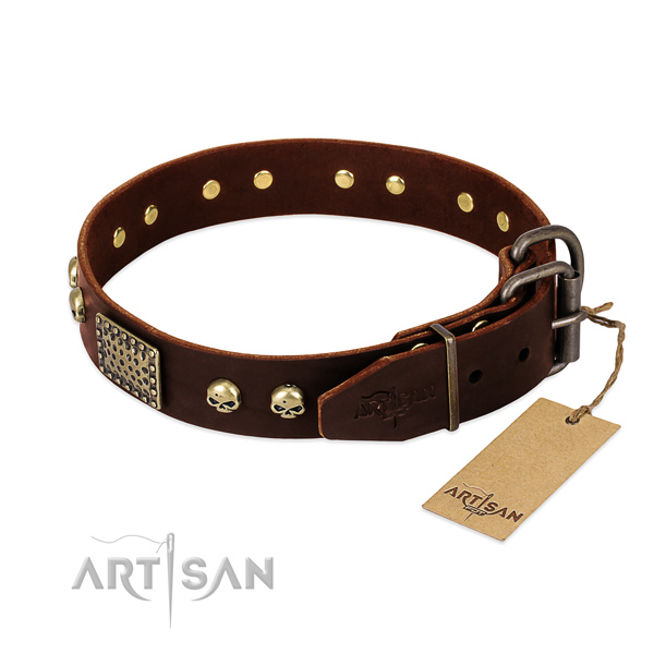 Rust-proof hardware on everyday walking dog collar