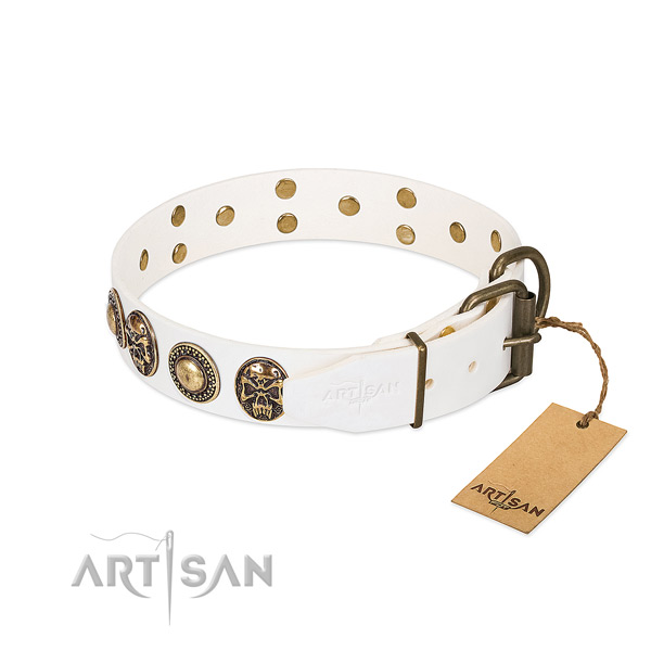 Durable studs on daily walking dog collar