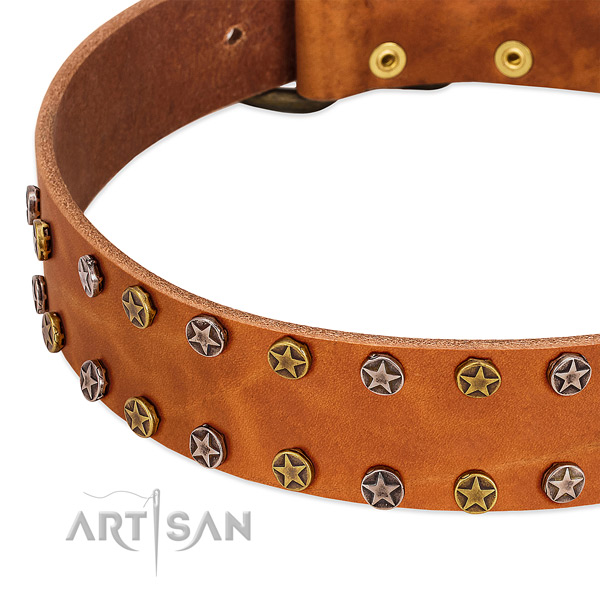 Stylish walking leather dog collar with significant adornments