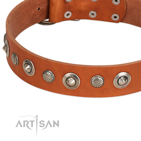 Amazing embellished dog collar of strong natural leather