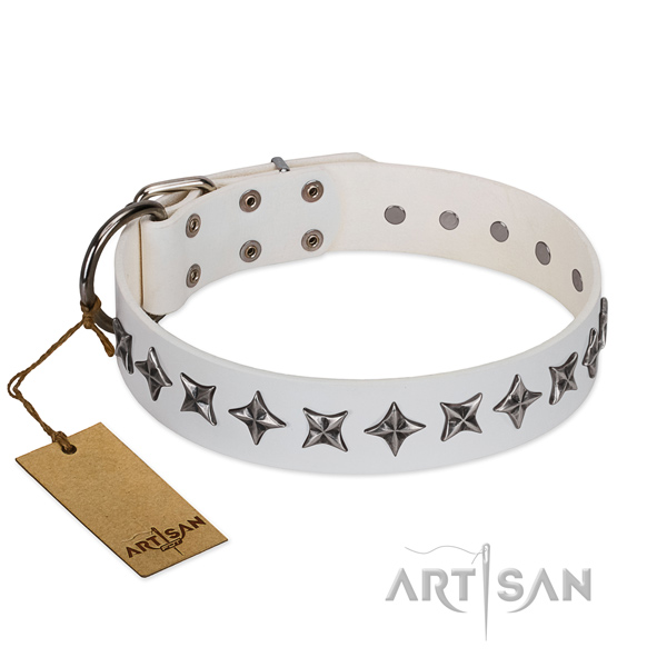 Fancy walking dog collar of finest quality full grain natural leather with studs