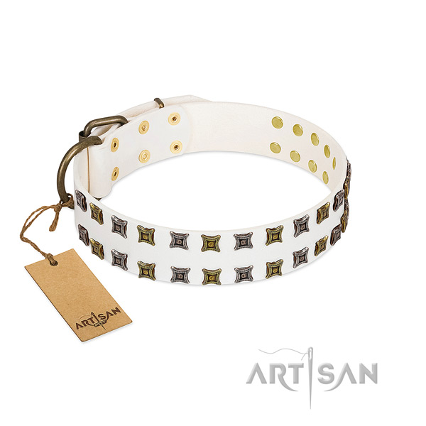 Reliable leather dog collar with adornments for your four-legged friend