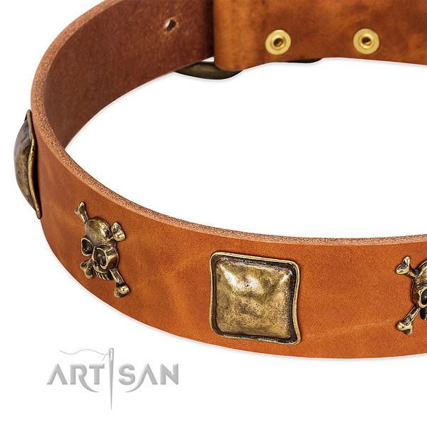 Incredible full grain leather dog collar with rust-proof adornments