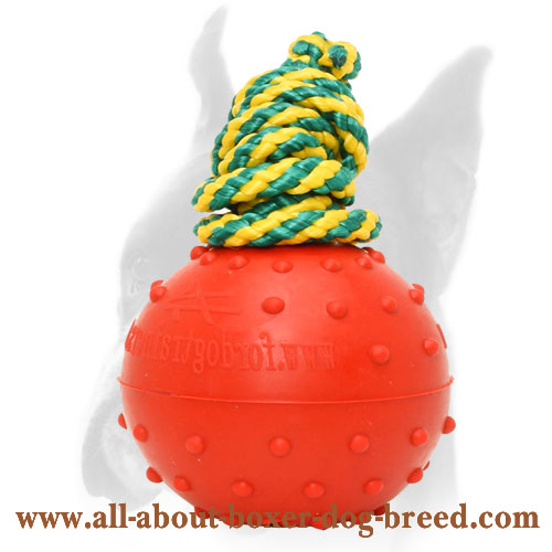 Boxer Dog Water Ball with Dotted Surface