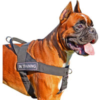 Dog Harnesses Boxer