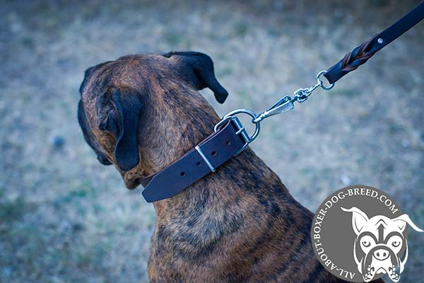 Leather Boxer Collar with Strong Buckle