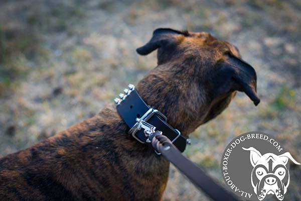 Leather Boxer Collar with Reliable Hardware