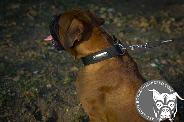 Strong Buckled Nylon Boxer Collar