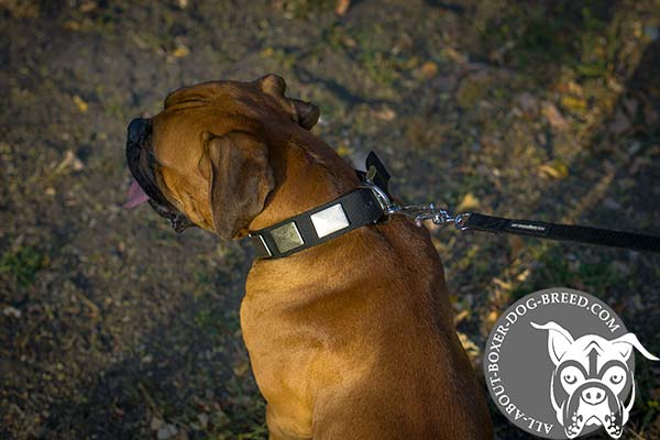 Nylon Boxer Collar with Rust Proof Buckle and D-Ring