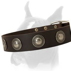 Wide Solid Leather Buckle Collar with Silver Plated Ornamented Plates