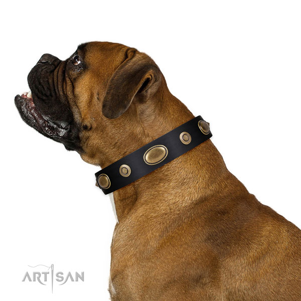 Daily use dog collar of natural leather with significant adornments