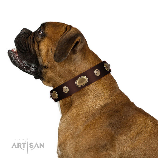 Everyday use dog collar of genuine leather with stylish adornments