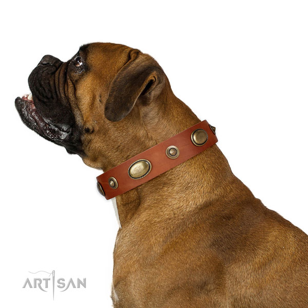 Basic training dog collar of natural leather with extraordinary adornments