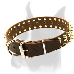 Amazing Collar with Spikes