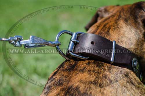 Boxer Leather Collar With Strong Hardware