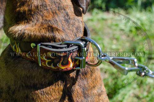 Boxer Leather Collar Adjustable and Reliable