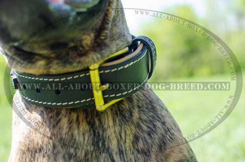 Boxer Leather Collar With Braided decoration