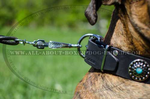 Boxer Leather Collar Of Top Quality