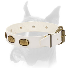Adjustable leather collar for Boxer