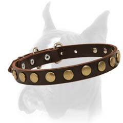 Handmade leather Boxer collar