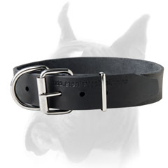 Classic Design Leather Collar with Nickel Hardware