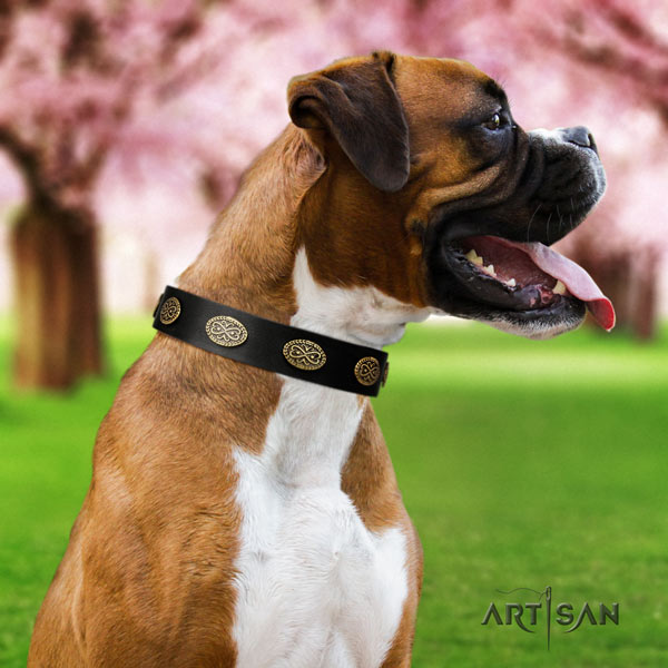 Boxer full grain natural leather collar with corrosion resistant D-ring