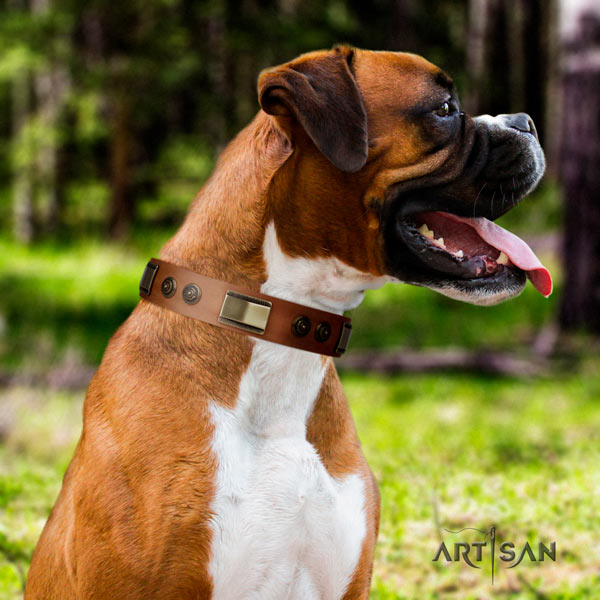 Boxer full grain leather collar with rust-proof studs
