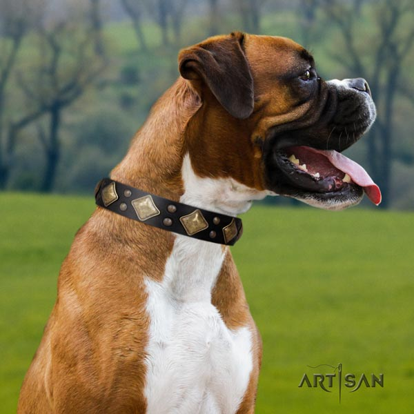 Boxer full grain natural leather collar with strong fittings