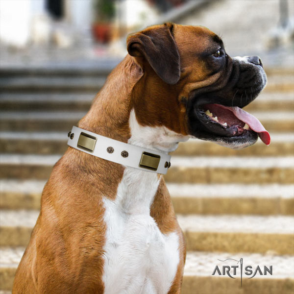 Boxer full grain natural leather collar with corrosion resistant decorations