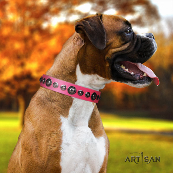 Boxer full grain natural leather collar with durable hardware