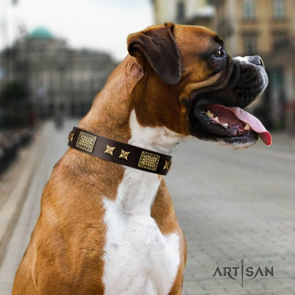 Boxer full grain leather collar with strong buckle