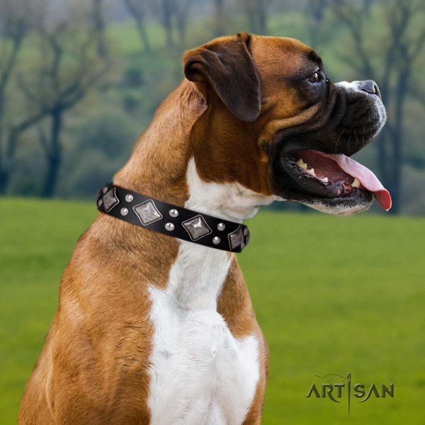 Boxer full grain natural leather collar with rust-proof D-ring