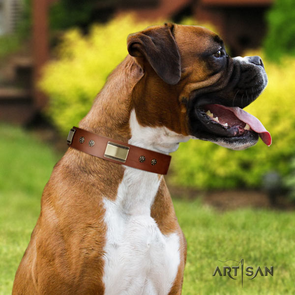 Boxer full grain natural leather collar with rust resistant embellishments
