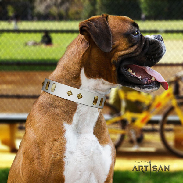 Boxer full grain leather collar with durable hardware for everyday walking